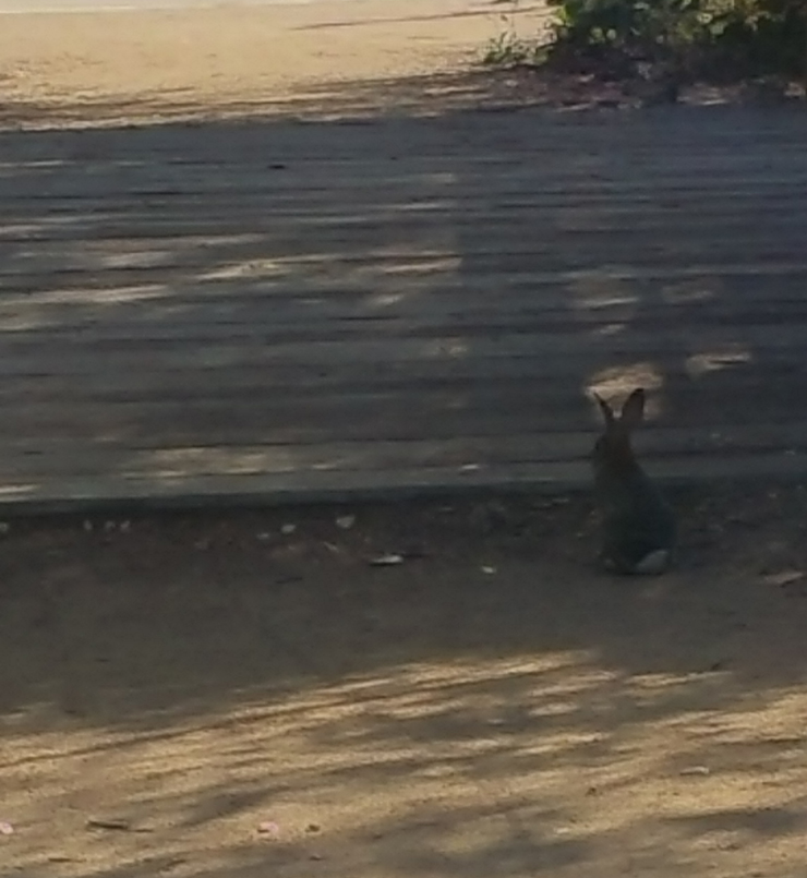 Bunny rabbit near the bridge