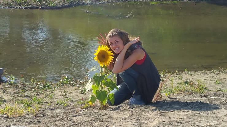 sunflower by the stream