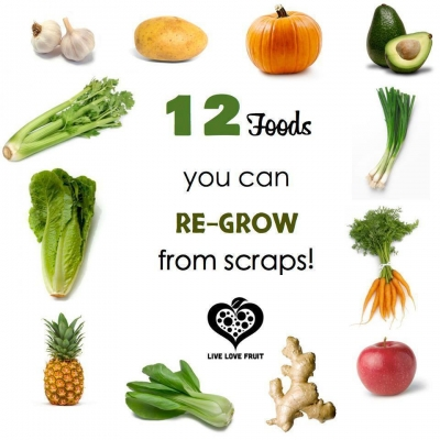foods you can regrow tips to live a healthy lifestyle