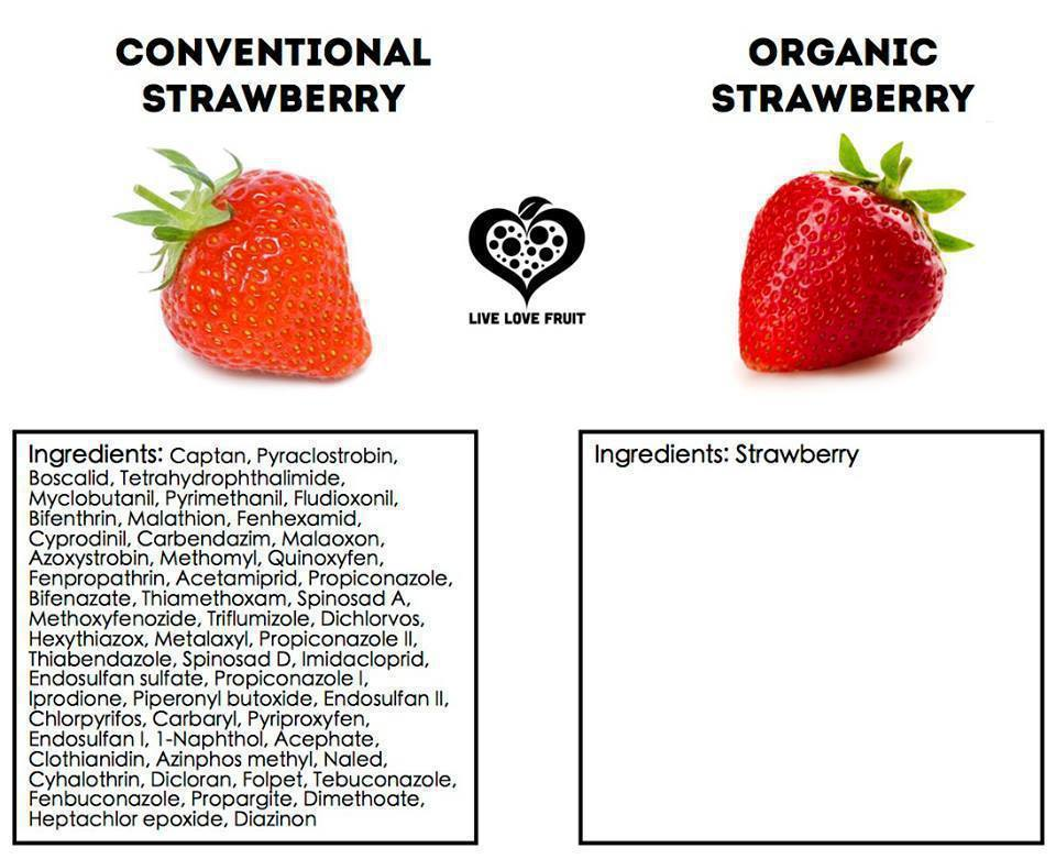 organic vs chemical healthy lifestyle