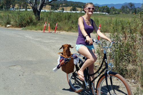 biking with dogs